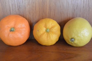 Mandarin orange (L), yuzu in the middle and lemon (R).